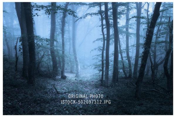 pasdechat_original_forest